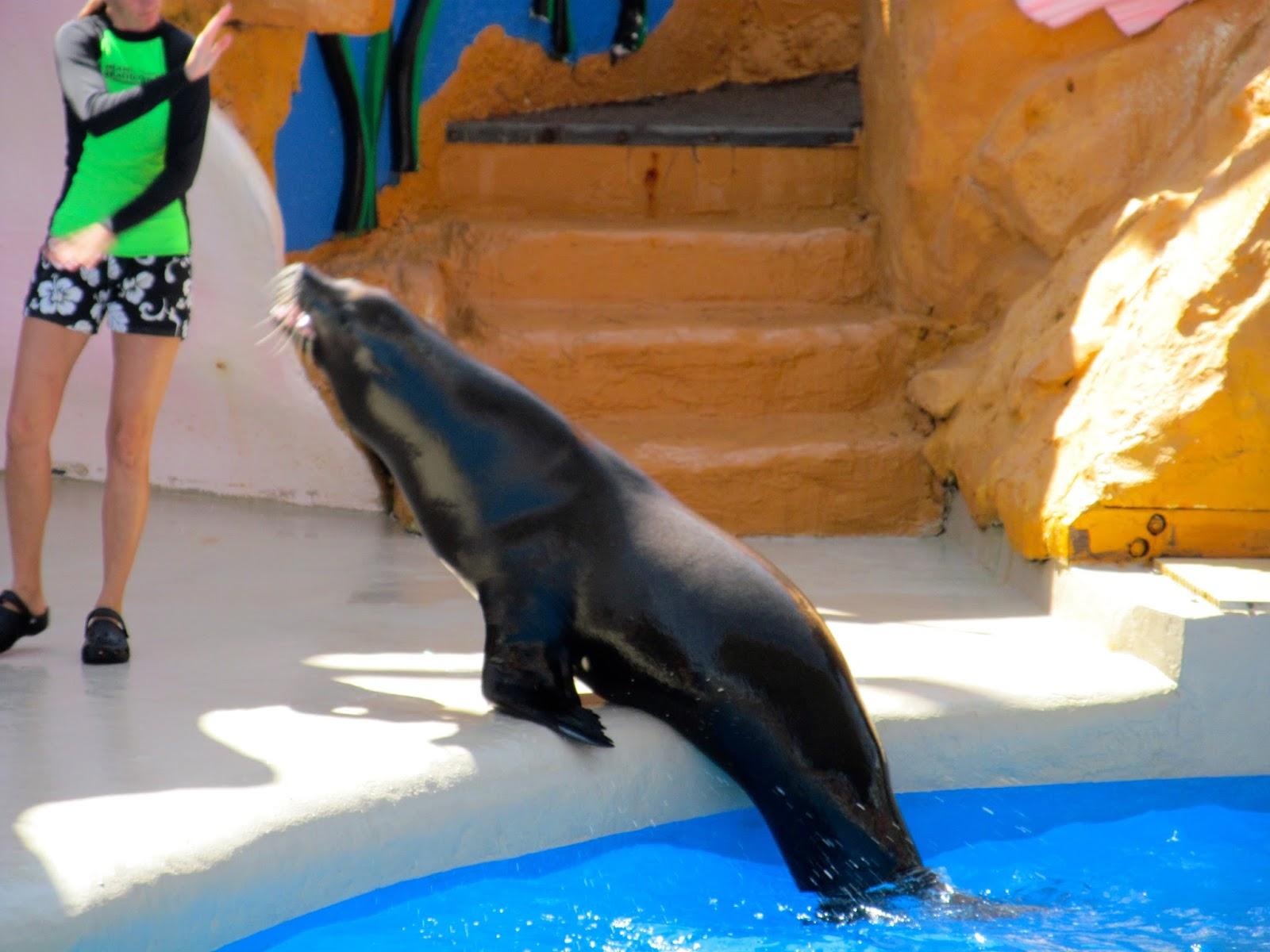 Sea Lion Show Miami Seaquarium, FL - ouroutdoortravels.blogspot.com