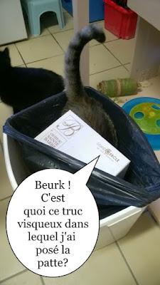 C'est l'histoire d'une chatte et d'une poubelle !