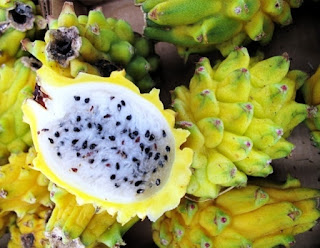 bibit-buah-naga-kuning.jpg