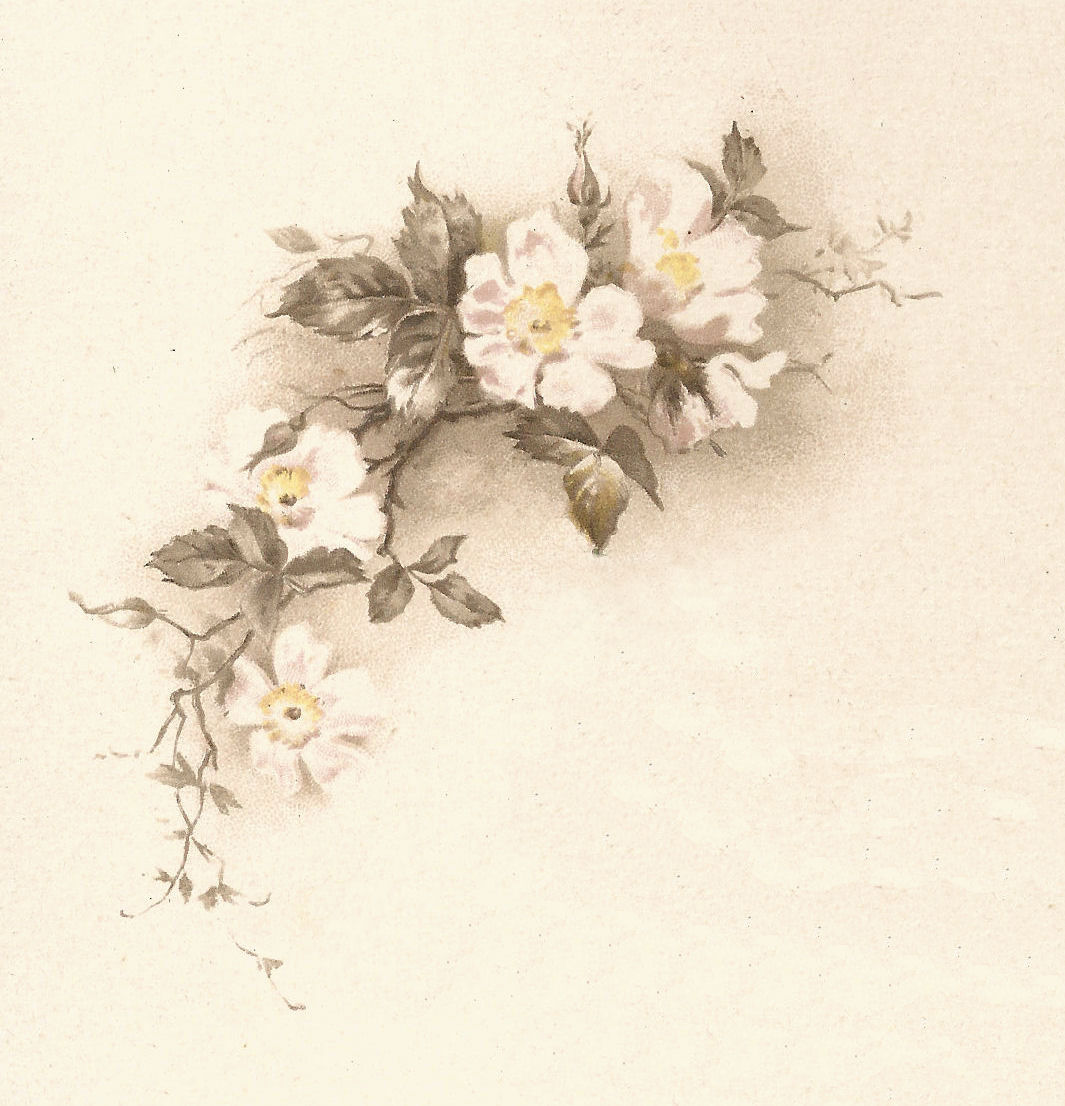 Free Flower Graphic Vintage White Illustration Corner Design