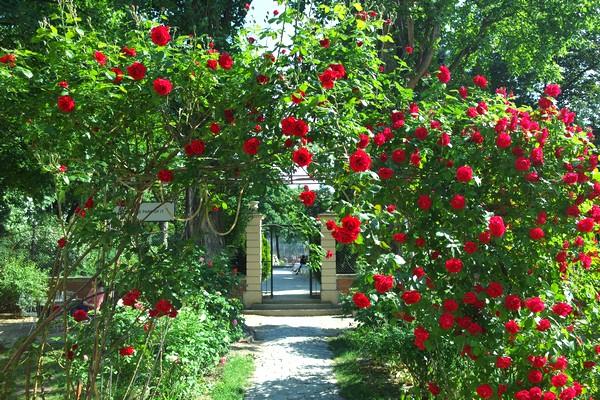 vienne vienna josefstadt deli bluem volkskundemuseum jardin caché cour intérieure