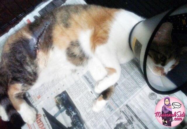 penyakit sporo kucing