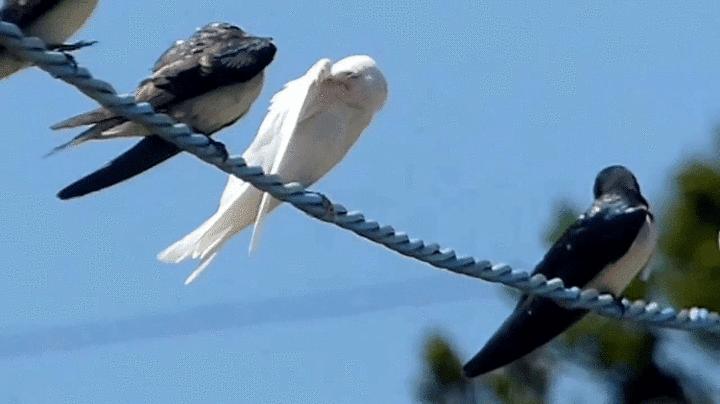 4 Jenis Burung Walet Yang Harus Anda Ketahui Sukses Perawatan