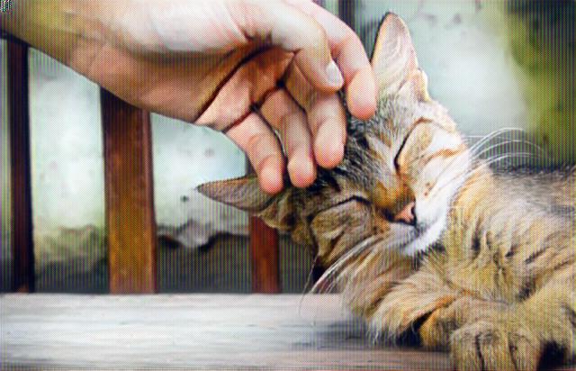 Persona acariciando con su mano a un gato