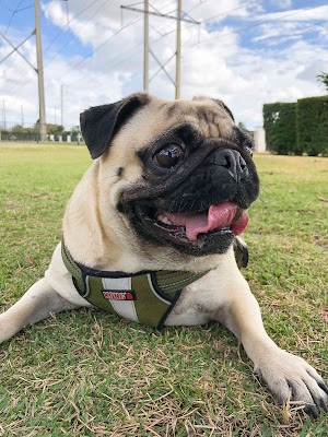 Miami and Doral, Florida specializing in Dog Boarding Sitting and Dog Hotel