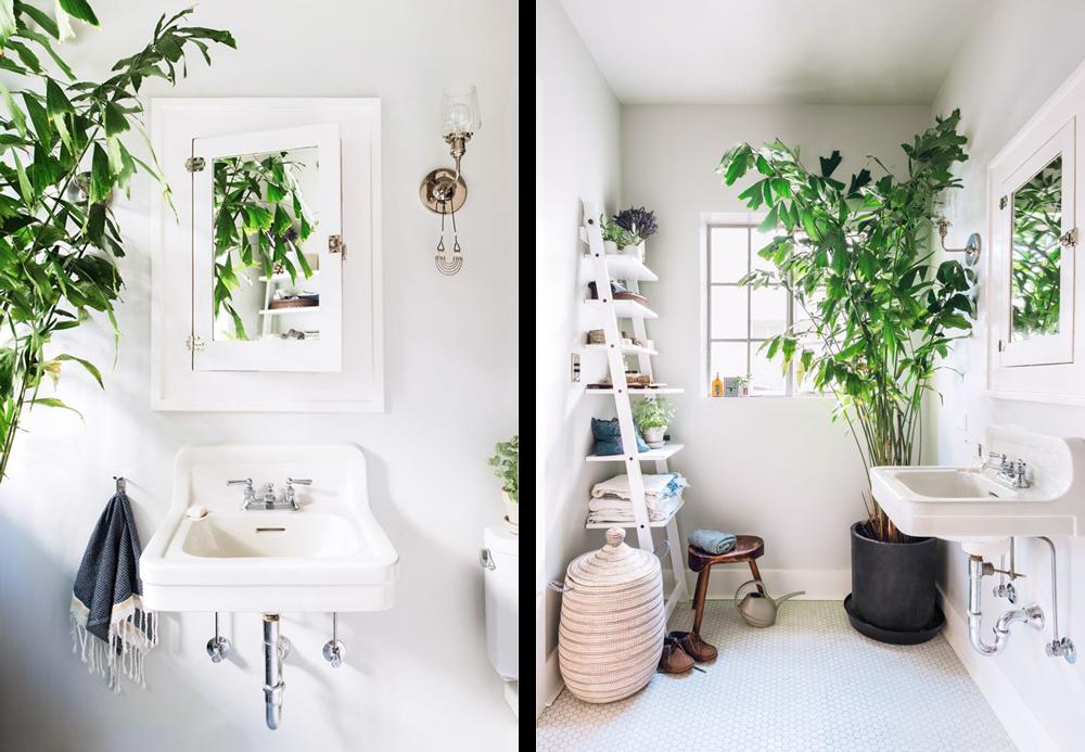 la fabrique d co des plantes dans la salle de bain inspiration et conseils. Black Bedroom Furniture Sets. Home Design Ideas