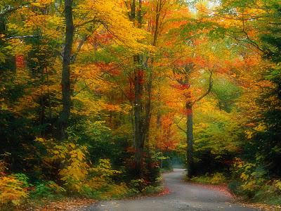 camino-penetrando-al-interior-de-un-frondoso-bosque