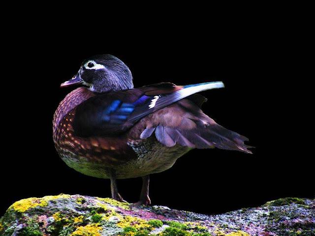 Amazing World & Fun: Beautiful Colorful Birds - Nature - photo#42