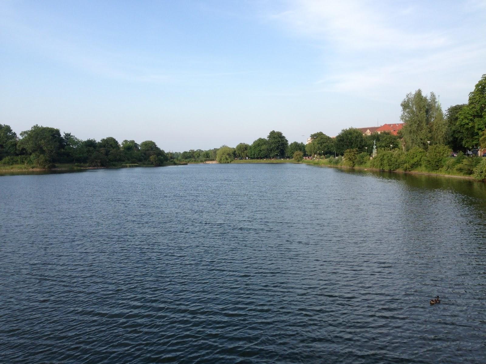 vand, sø, vold, bryggen, islands brygge, christians havn, svane, natur, gåtur, sommer, sol, dyreliv, idyl