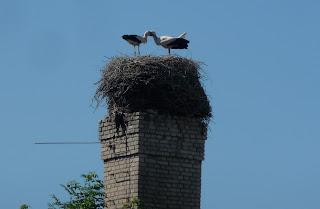 Пінськ. Гніздо лелеків біля площі Леніна
