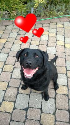 Angel Schwarzer Labrador