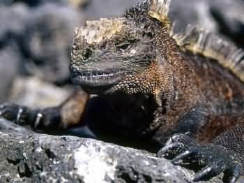 Ecuador presenta nuevas normas de protección para las Islas Galápagos