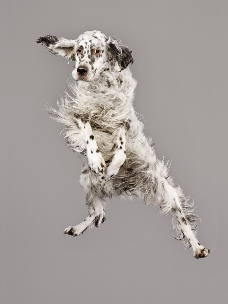 Flying Pet from German photographer Julia Christe