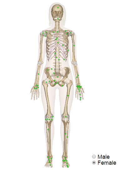 Cuerpo Humano: El sistema esquelético