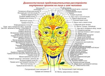 Проекции внутренних органов на лице и шее человека