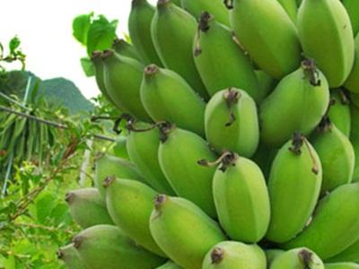 ผลการค้นหารูปภาพสำหรับ กล้วยน้ำว้าดิบ