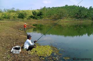Umpan Serbuk Ikan Nila Di Alam Liar
