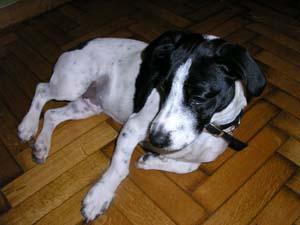 εκπαιδευση σκυλων αγχος αποχωρισμου