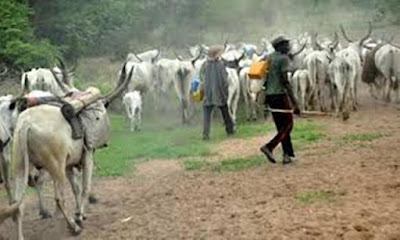 """<img src="""" Breaking-Herdsmen-on-the-prowl-as-they-unleash-terror-on-Benue-communities,-killing-15,-scores-injured,-others-missing .gif"""" alt="""" Breaking: Herdsmen on the prowl as they unleash terror on Benue communities, killing 15, scores injured, others missing > </p>"""