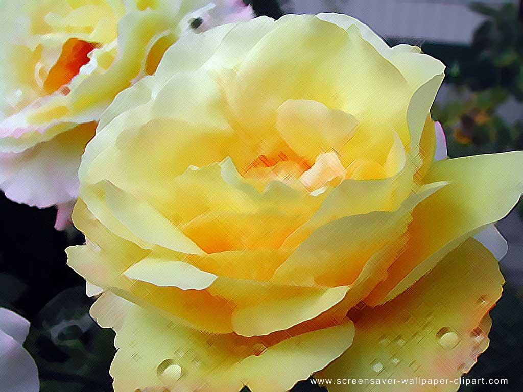 Rose Wallpaper: Yellow Rose HD Wallpaper Download Free