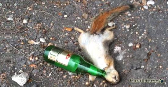 Esquilo Bêbado