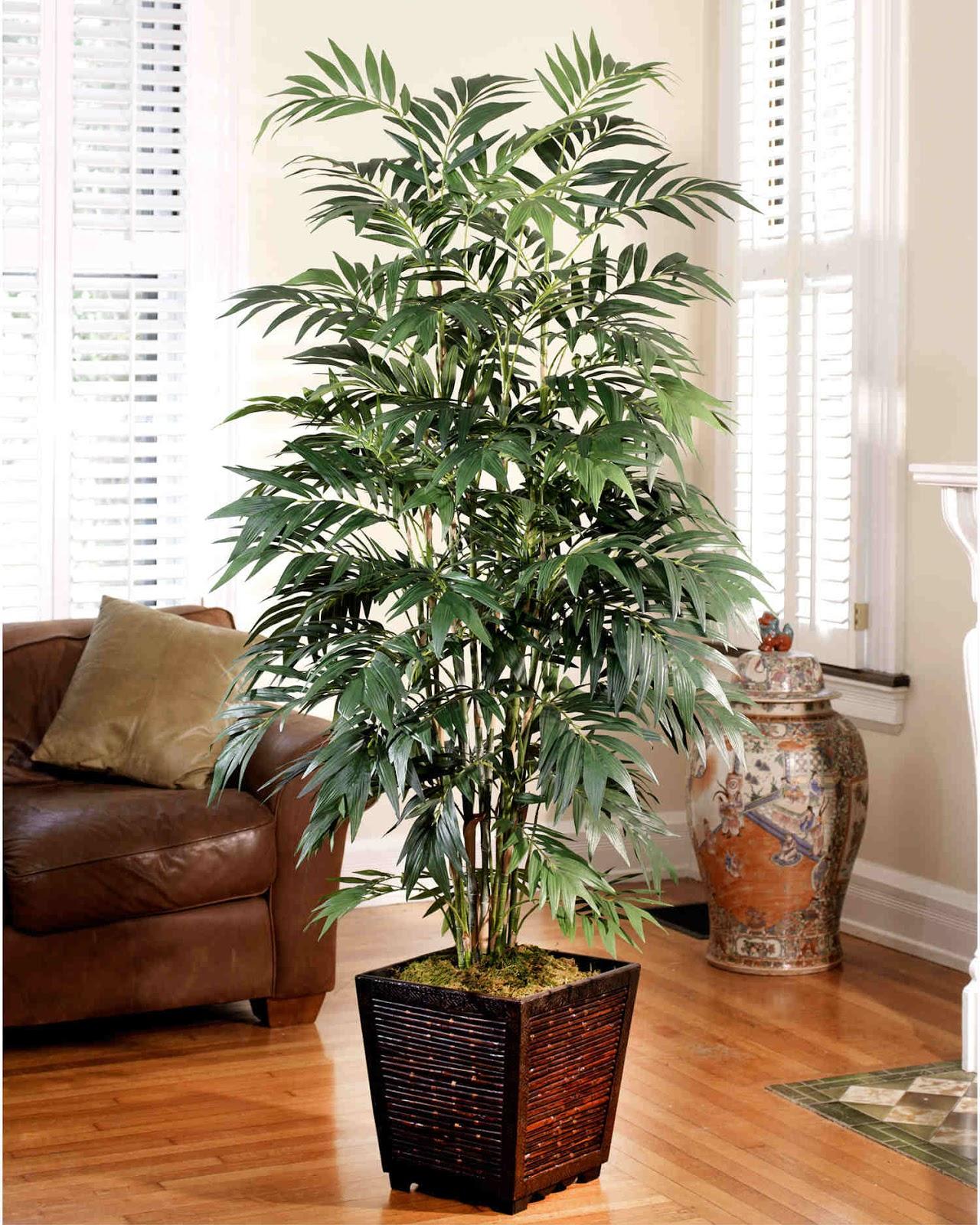 plante interieur humidite