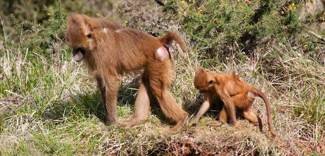 Monos Cabárceno