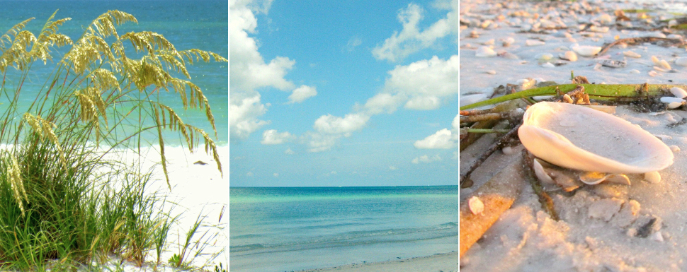 Coastal Beach Color Palette Schemes Room Decor Inspiration