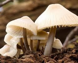 ciri-ciri jamur, lumut kerak dan mikorhiza