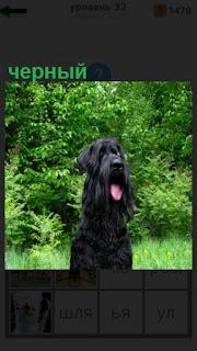на поляне сидит собака черного цвета с открытой пастью