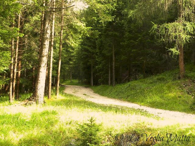Cortina d'Ampezzo sentieri nel bosco