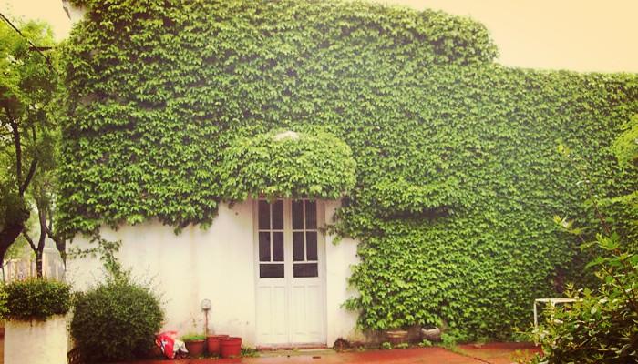 Planta enamorada del muro