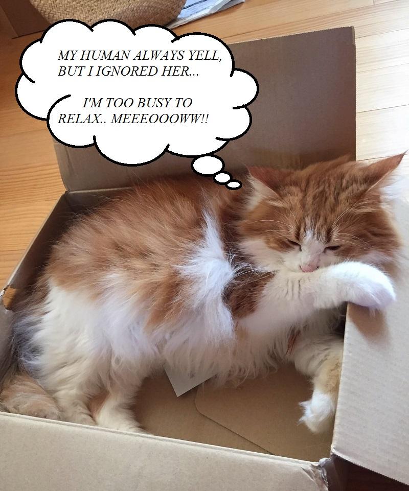 Restylane skincare review, cat meme