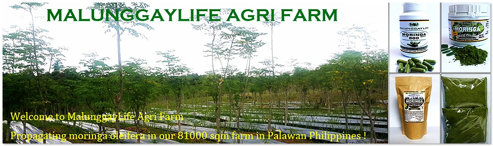 Moringa Farm / MalunggayLife Agri Farm Philippines