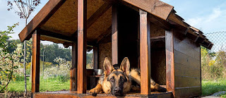 Buy Pet Houses Checklist for New Adopters