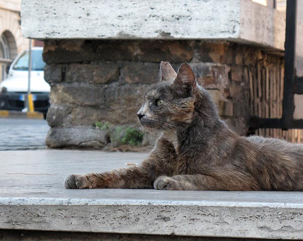 feral cat TNR ear tipped Rome Italy