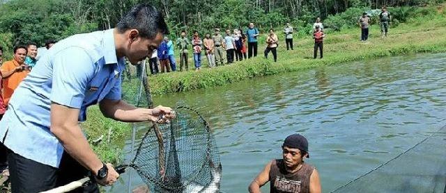 Lokasi Budidaya Ikan Patin yang Bagus dan Strategi Ukuran Kolam 1000 Ekor