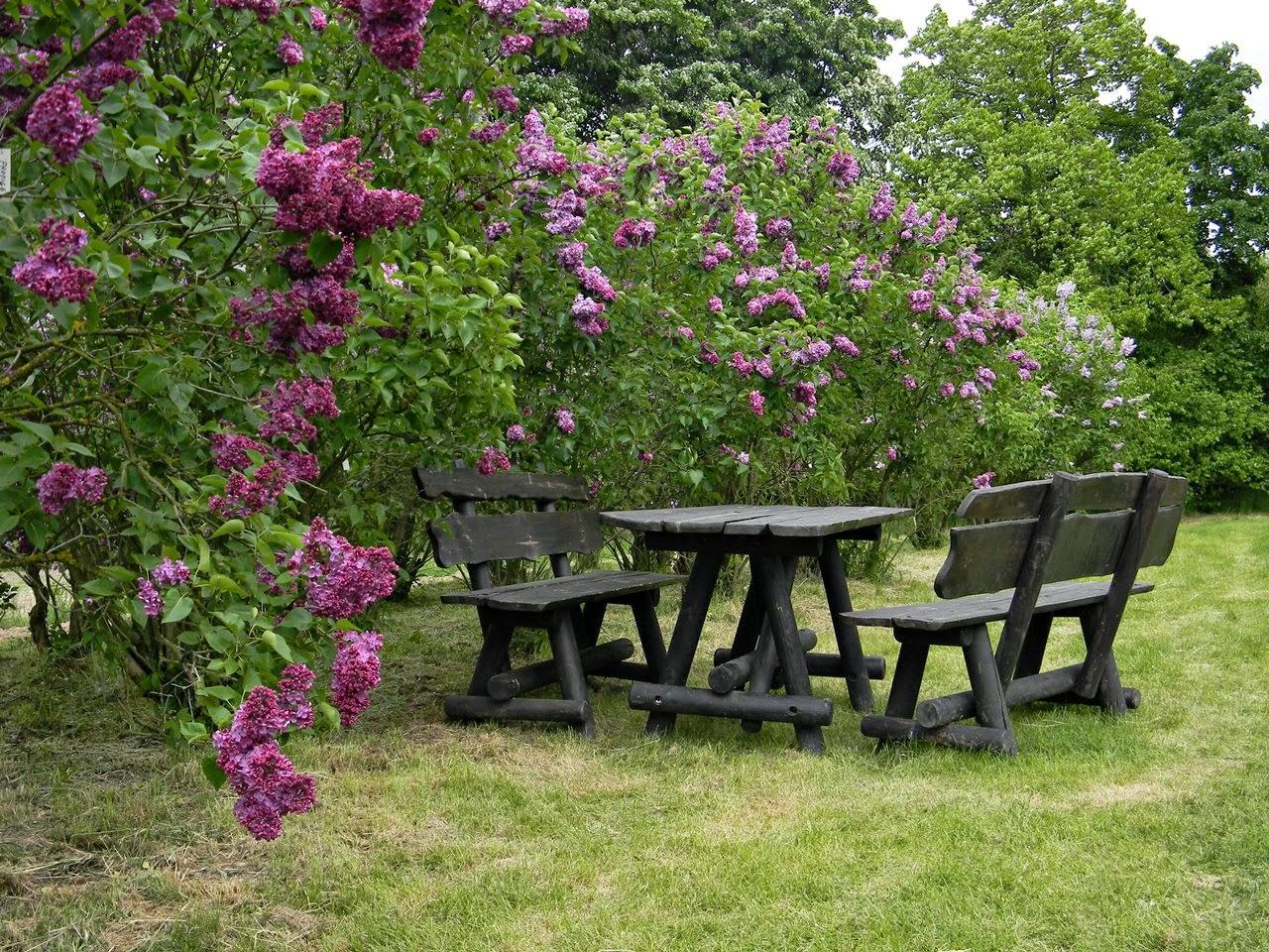 ławki, stół, liliaki, arboretum w Kórniku, przyroda