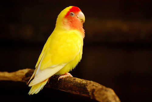 Hello Friends..!: yellow quaker parrot