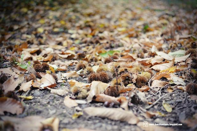 jesień toskańska - las