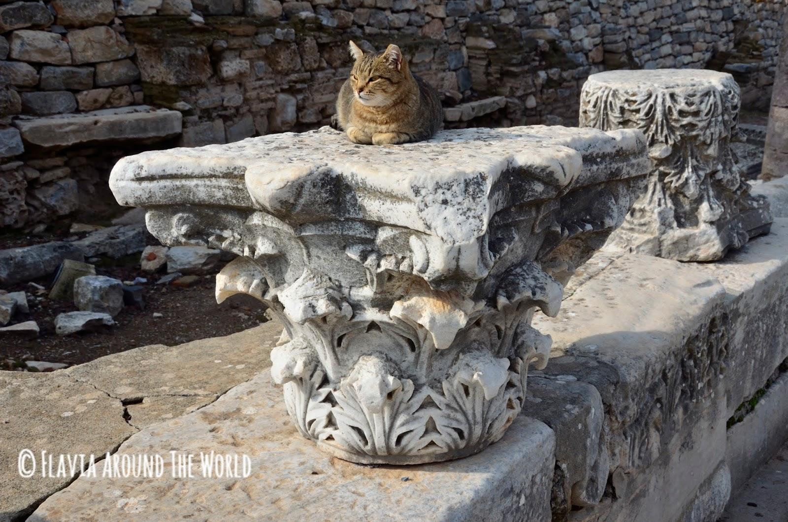 Gatos de Éfeso