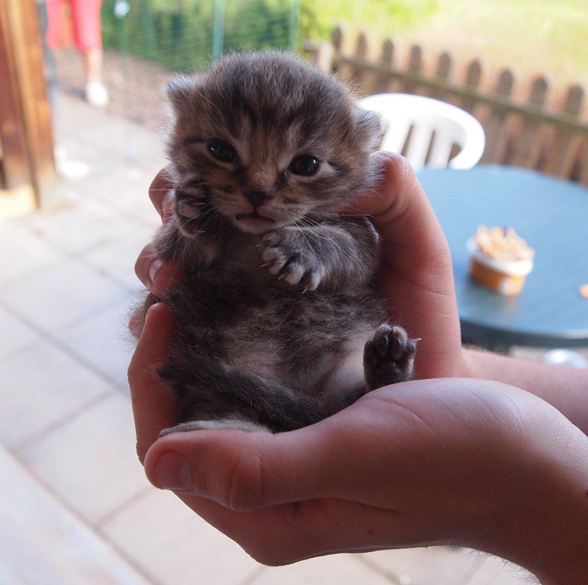 Baby porcupine :) | Weird but cute baby animals ...  |Weird Cute Animals
