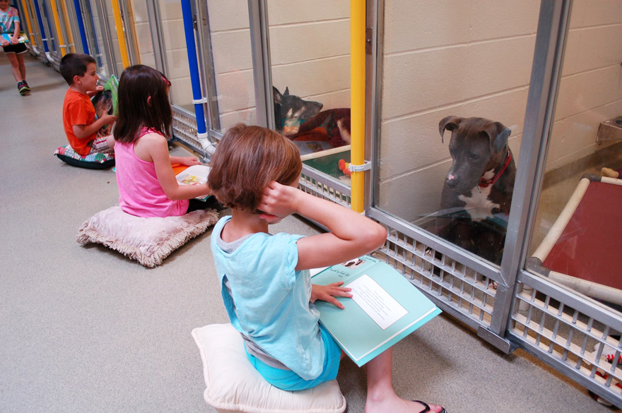 Kids read to shelter dogs not only to keep them company but also to make them more adoptable - Children Practice Their Reading Skills To Calm Shy Shelter Dogs