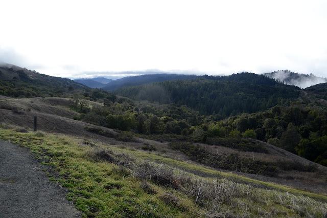 looking over Stevens Creek