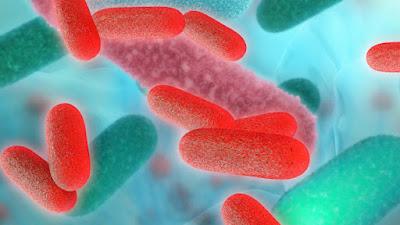 Can Gut Bacteria Unlock Rheumatoid Arthritis? - El Paso Chiropractor