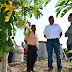 Promueven productividad de papayeros y sandieros de Espita