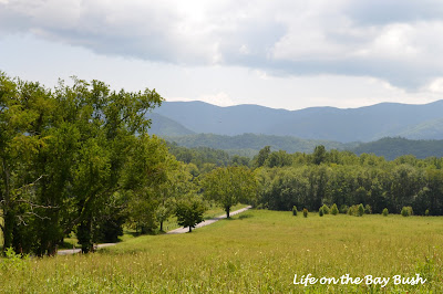 Views in Cades Cove
