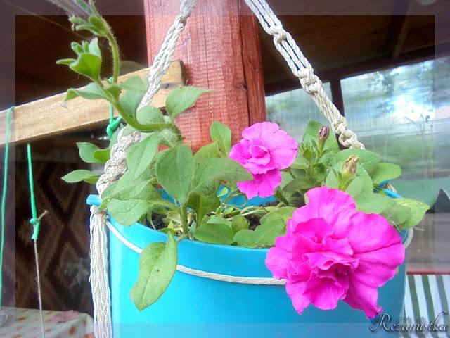 махровая петунья во время цветения