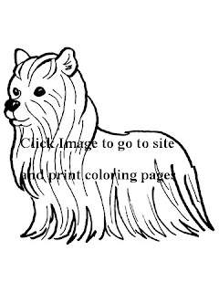 http://www.supercoloring.com/pages/yorkshire-terrier