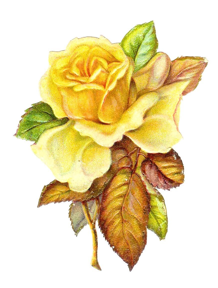 Antique Images: Free Flower Clip Art: Single Yellow Rose ...